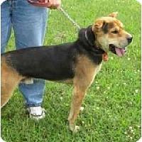 Adopt A Pet :: Reggie - Chicago, IL