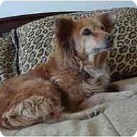 Adopt A Pet :: Spicy - Scottsdale, AZ