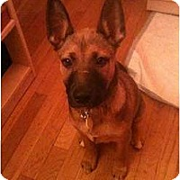 Adopt A Pet :: Honor ( In NY) - Hagerstown, MD