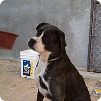 Adopt A Pet :: Savannah - Lucerne Valley, CA