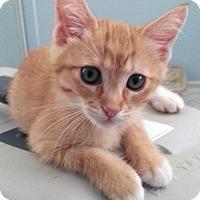 Adopt A Pet :: Geddy - Irvine, CA
