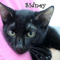 Adopt A Pet :: Sidney - Wichita Falls, TX