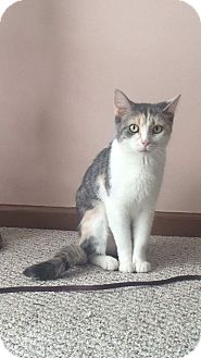 Calico Cat for adoption in Columbus, Ohio - Mozzi
