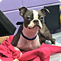Adopt A Pet :: Trudee - Greensboro, NC