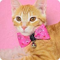 Adopt A Pet :: Jemma - Chicago, IL