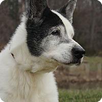 Adopt A Pet :: Oreo A34268919 - Westampton, NJ