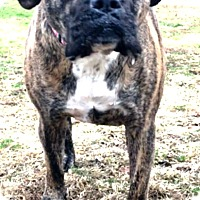Adopt A Pet :: Nadine is Adopted - Turnersville, NJ