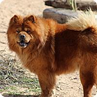 Adopt A Pet :: MAMU - Eastsound, WA