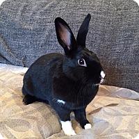 Adopt A Pet :: Mocha - Grand Rapids, MI