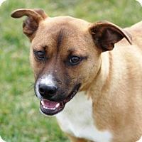 Adopt A Pet :: Dunbar - Liberty Center, OH