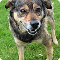 Adopt A Pet :: Alisa - Michigan City, IN