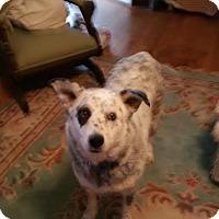 Adopt A Pet :: Emma - Chatham, VA