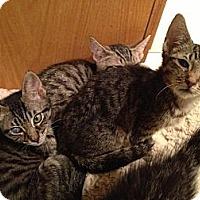Adopt A Pet :: Discoverers - East Hanover, NJ