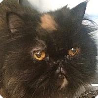 Adopt A Pet :: Vivian - Beverly Hills, CA
