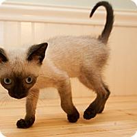 Adopt A Pet :: Disney - Bradenton, FL