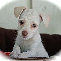 Adopt A Pet :: Trina - La Habra Heights, CA
