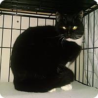 Adopt A Pet :: Huggy Bear - Centralia, WA