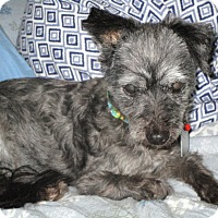 Adopt A Pet :: Bernadette - Sheridan, OR