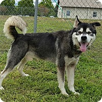 Adopt A Pet :: Chewy - Augusta County, VA