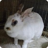 Adopt A Pet :: Lady - Williston, FL