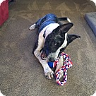 Adopt A Pet :: Tillman
