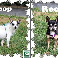 Adopt A Pet :: Bebop & Rocky - Fallston, MD
