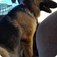 Adopt A Pet :: Chloe - San Angelo, TX
