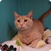 Adopt A Pet :: Caesar - West Des Moines, IA