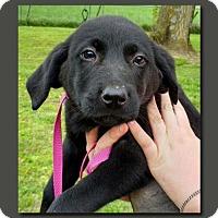 Adopt A Pet :: Dina NJH Solis - Wakefield, RI