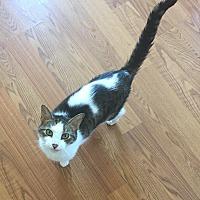 Adopt A Pet :: Bess - Greensburg, PA