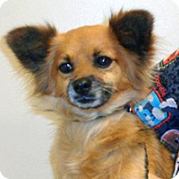 Adopt A Pet :: Peg - Wildomar, CA