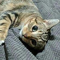 Adopt A Pet :: Cleopatra - Salem, OR