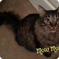 Adopt A Pet :: MowMow / AJ - Cantonment, FL