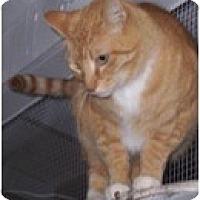 Adopt A Pet :: Kona - El Cajon, CA