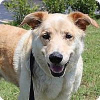 Adopt A Pet :: Dusty - Justin, TX