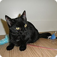 Adopt A Pet :: Bree - Milwaukee, WI