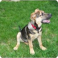 Adopt A Pet :: Tyler - in CT! - Adamsville, TN