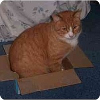 Adopt A Pet :: Pumpkin - Quincy, MA