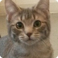 Adopt A Pet :: Echo - Colfax, IA