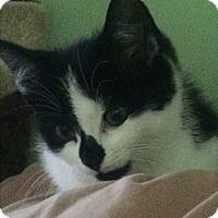 Adopt A Pet :: Lulu - Southington, CT