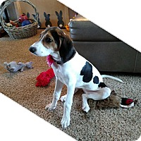 Adopt A Pet :: Lady - Gig Harbor, WA