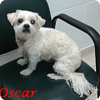 Adopt A Pet :: Oscar-PENDING - Mississauga, ON