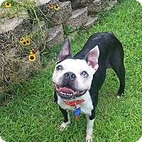Adopt A Pet :: Ashley - Jackson, TN