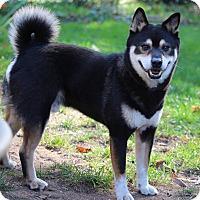 Adopt A Pet :: Jimmu - Manassas, VA