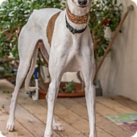 Adopt A Pet :: Elgin - Walnut Creek, CA