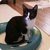 Adopt A Pet :: Jeeves - Phoenix, AZ