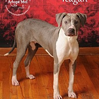 Adopt A Pet :: Teagan - Topeka, KS