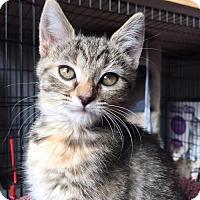 Adopt A Pet :: Jennipurr C170097: PENDING ADOPTION - Edina, MN