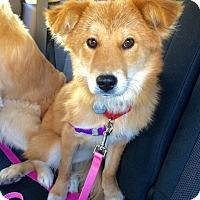 Adopt A Pet :: Sunshine - Harrison, NY