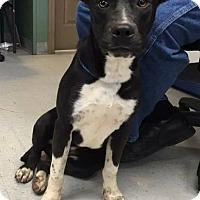 Adopt A Pet :: Naomi - Tower City, PA